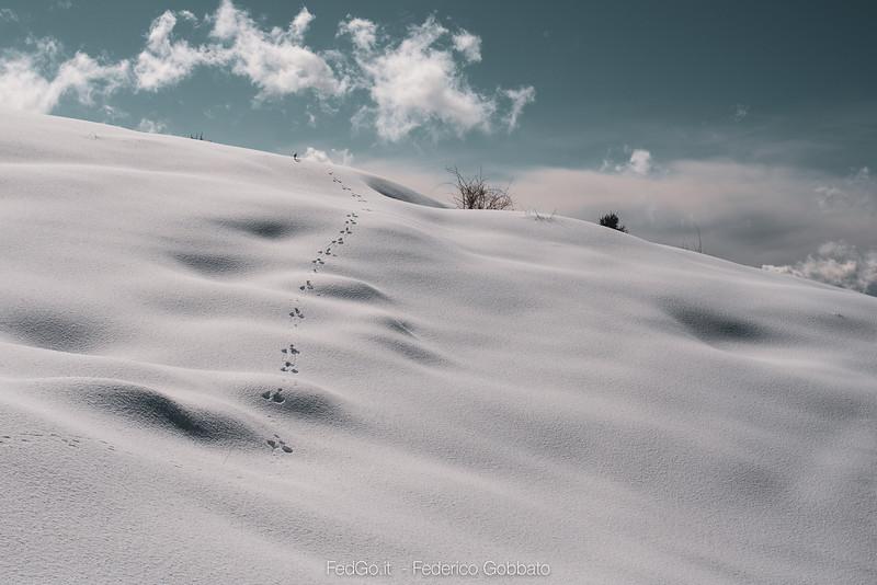 Fedgo-a73, Monte Asolone, Montegrappa, Neve-07 marzo 2020-2.jpg