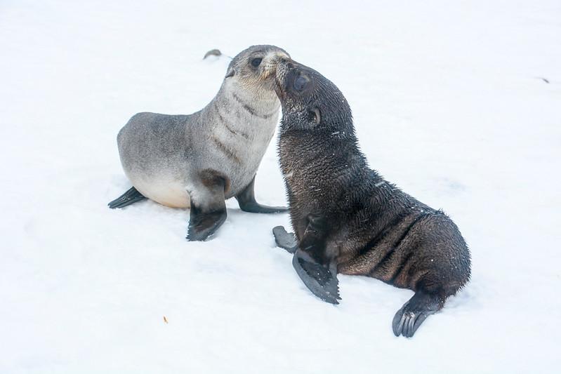 Seals_Fur-5.jpg