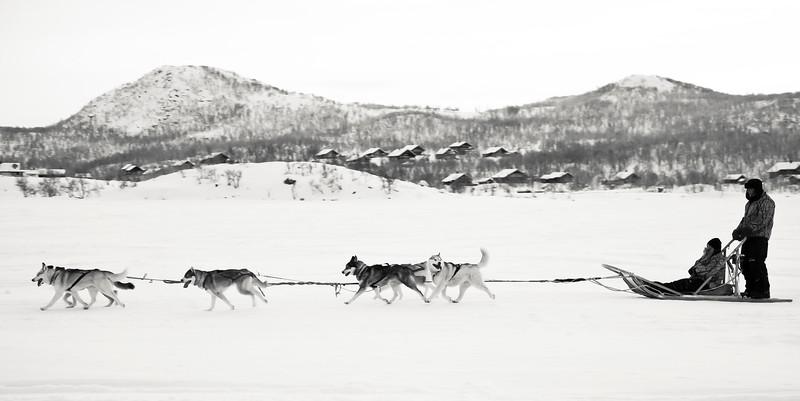 Dogsledging at Kilpisjärvi