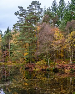 Faskally Wood and Loch Dunmore