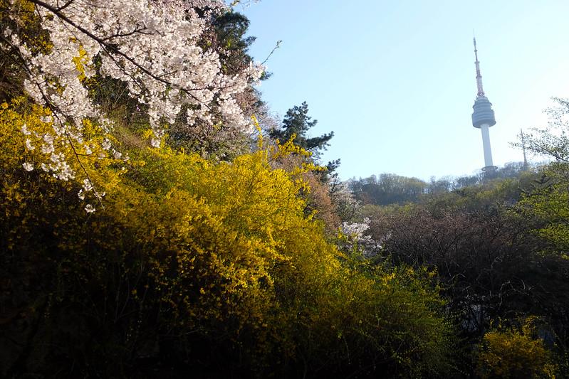 Namsan_Cherry_Blossoms_PhotoWalk-0110.jpg
