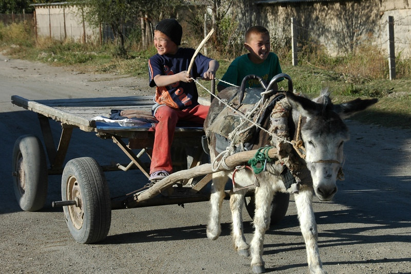 Kyrgyz Kids on Donkey Cart - Kochkor, Kyrgyzstan