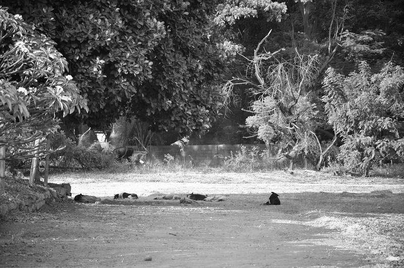2014-03 Bangalore 008.jpg