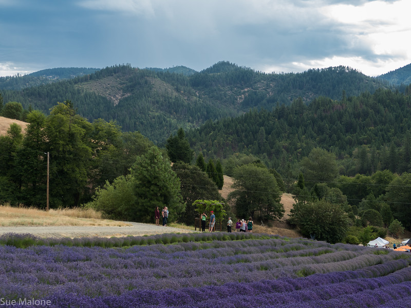 07-15-2018 A Day at the Lavender Farm-8.jpg