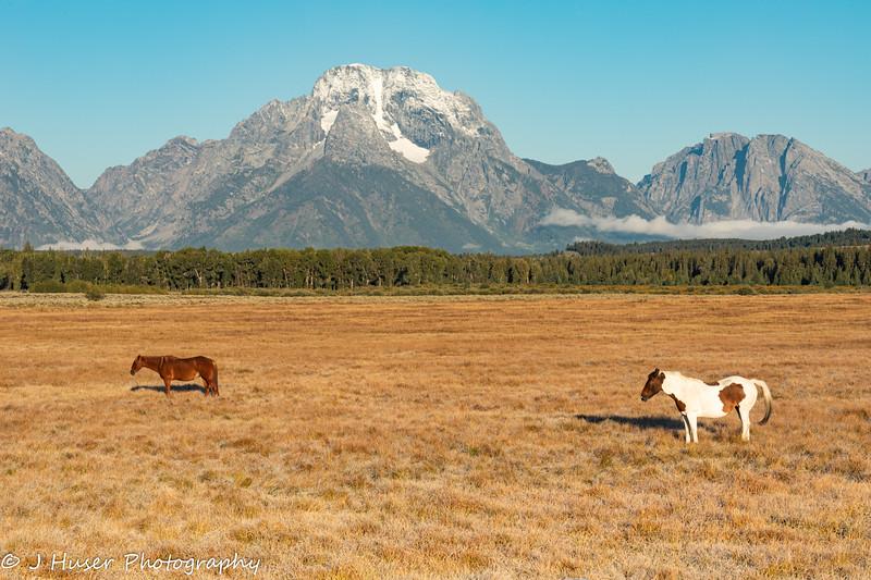 Horses in front of Mount Moran