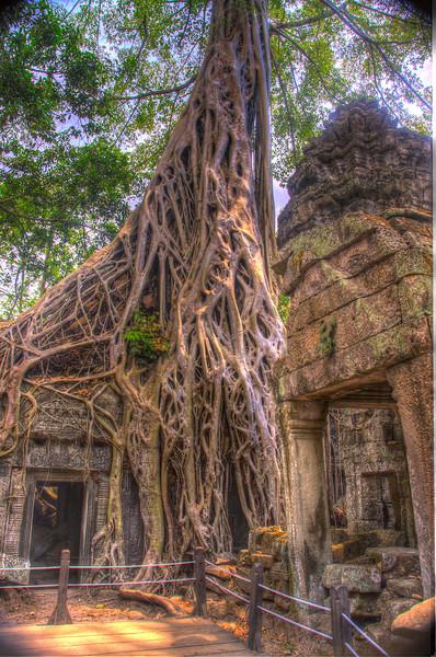 CambodiaTaPhromManyStringyRootsDSC_4988_89_90_tonemapped.jpg