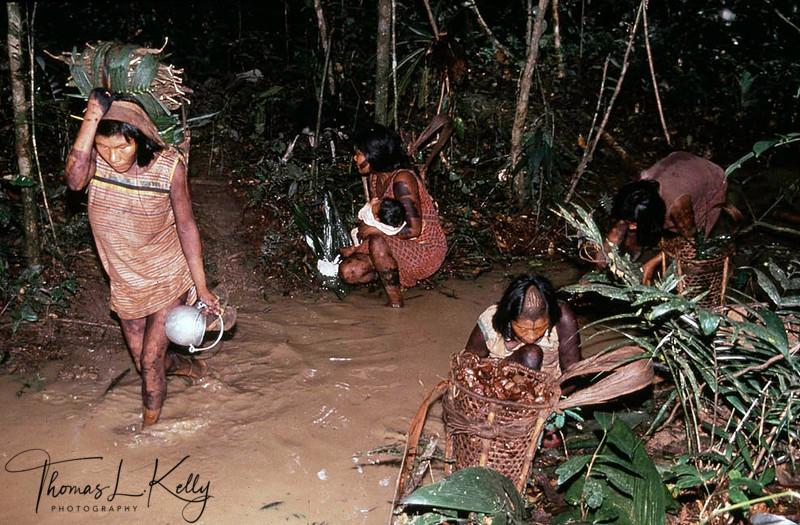 Kayapo women collecting the Brazalian nuts which is used to make medicinal oil.Kayapo, Brazilian Amazon.