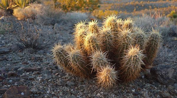 Shadow Mountain (Mojave) (4,197) - Nov 25, 2013