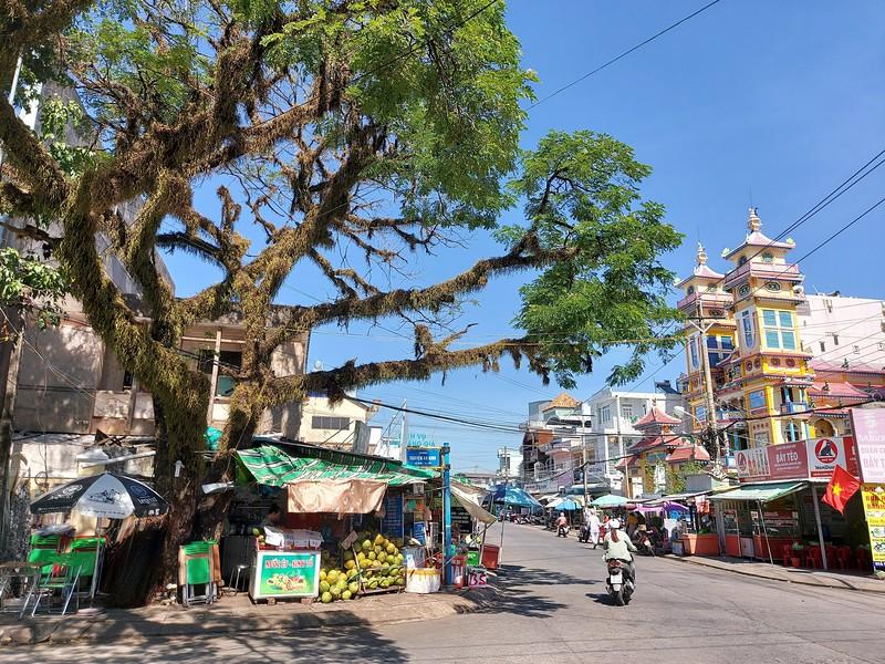 20210111_105049-duong-dong-tree.jpg