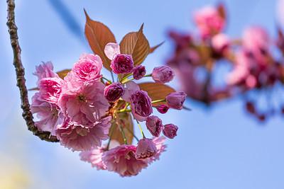 Fleurs et macros