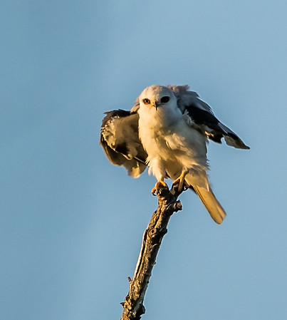 Birds_at_Chino_Hills