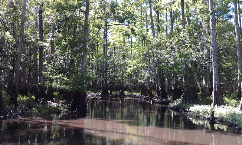 The dark section of the trees shows the high water mark on the St. Johns River
