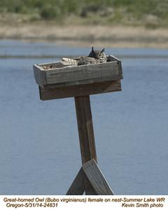 Great Horned Owl F24831.jpg