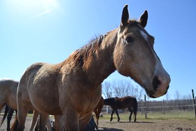 Horse photos 2017-18