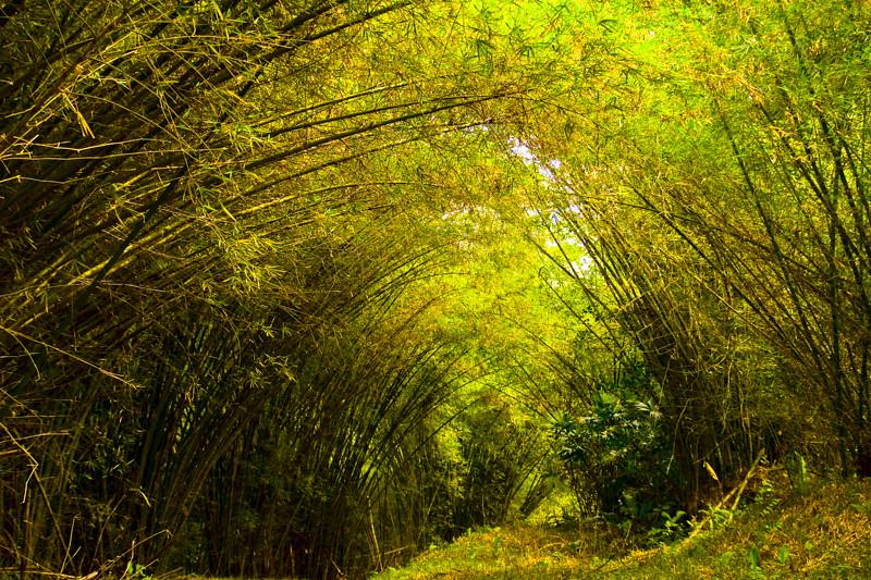 Costa Rica_Rainforest-20.jpg