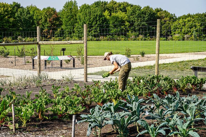 Arboretum Farm 8-19-19.JPG
