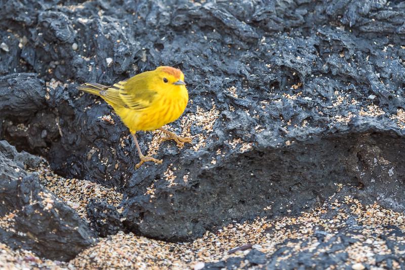 Galapagos-Best-093.jpg