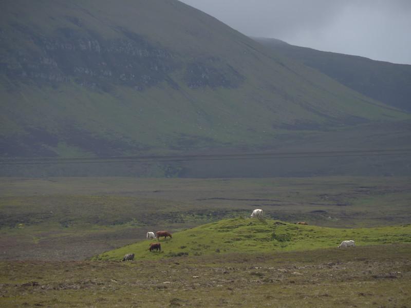 @RobAng Juni 2015 / Kilmaluag, Isle of Skye / Eilean a'Cheo Ward  (Inner Hebridies), Scotland, GBR, Grossbritanien / Great Britain, 78 m ü/M, 2015/06/20 13:27:33
