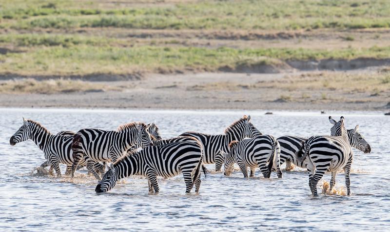 Tanzania_Feb_2018-332.jpg