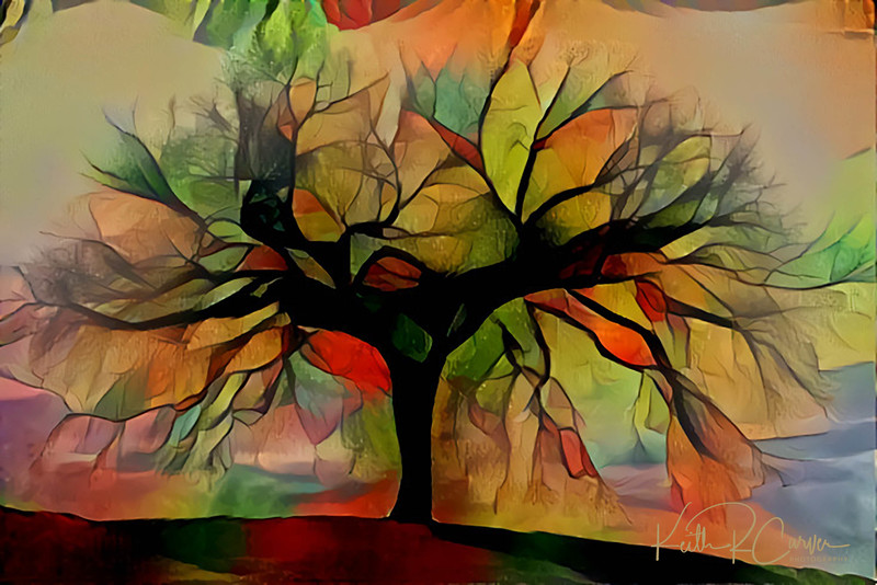 The aura of a huge maple tree at Longmeadow, Massachusetts