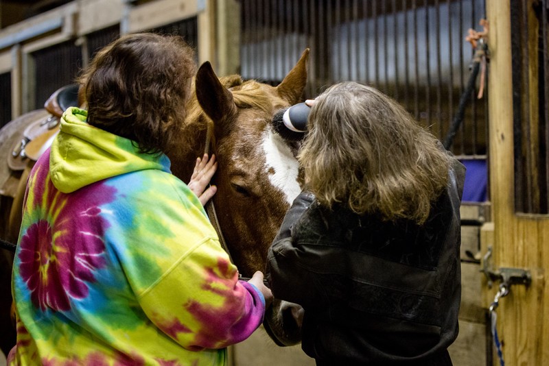 Ruth and Hercules who is receiving a little tender loving care from Jolene and he loves it!