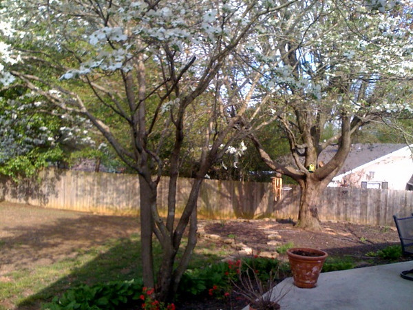 dogwood backyard 2.jpg