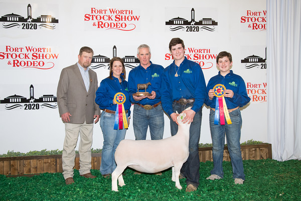 National Dorper Sheep Show