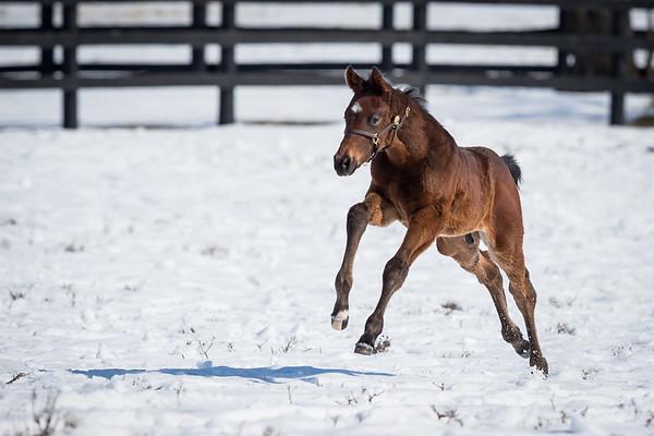 Darley… Foals '15