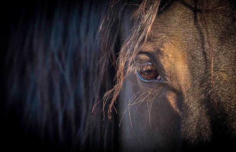 black horse eye.JPG