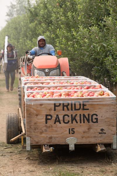 PridePacking-1022.jpg