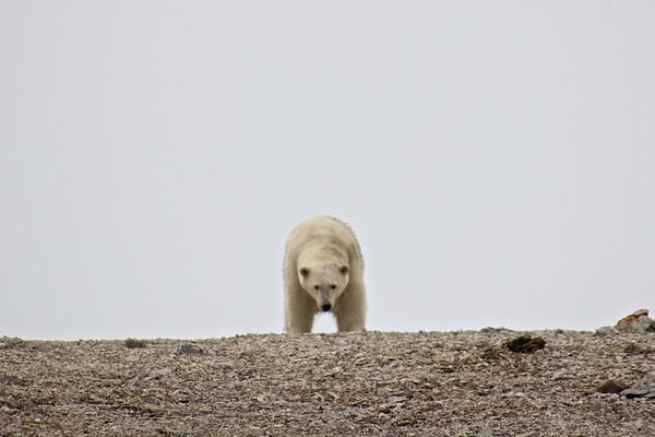 Dragi Bay Wrangel Island