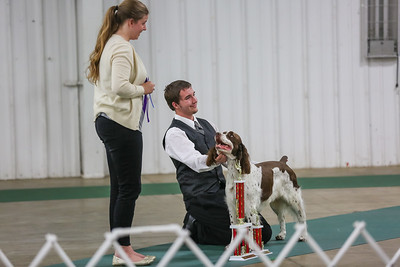 Dog Show FREE to Download