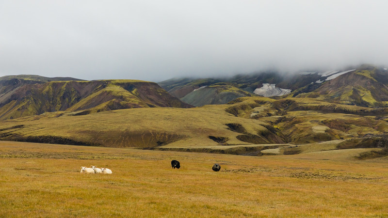 Iceland19_-1771.jpg