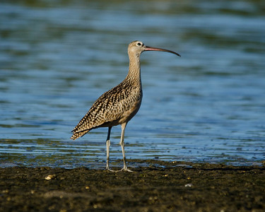 September 2012 (12 Species)