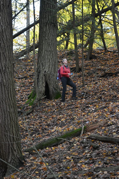 14 Brenda studying forest.JPG