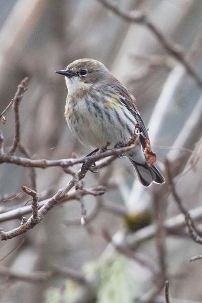 Ornithology Field TripMarch 8, 2020 Sky Oak Rd Fairfax