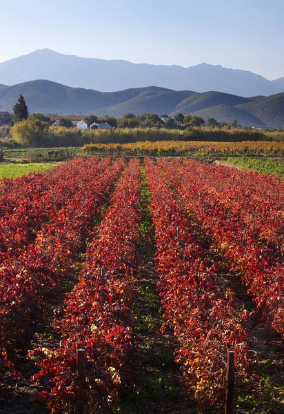 Wine Region - 4496.jpg