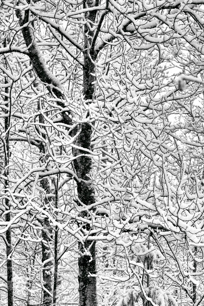 Morning Snow  #1904
