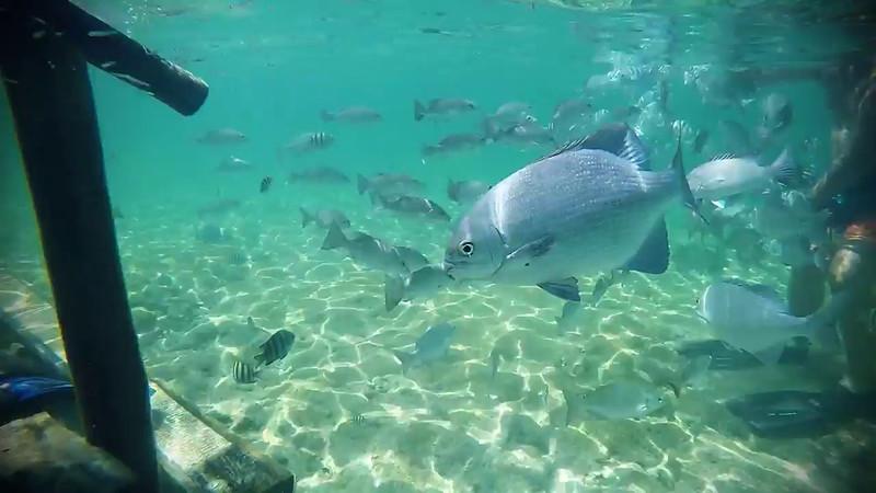 Fish3.m4v
