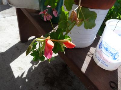 BO's Flowers