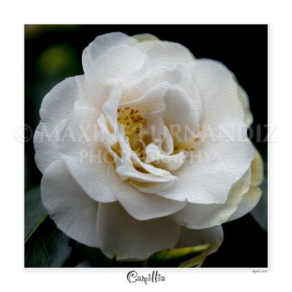 Flowers-1766-Edit.jpg