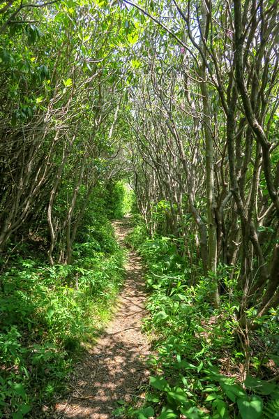 Greasy Cove Trail -- 5,690'