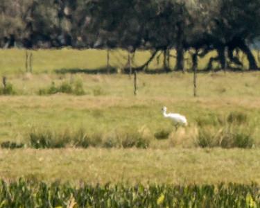 3-8 Lakeland Birding