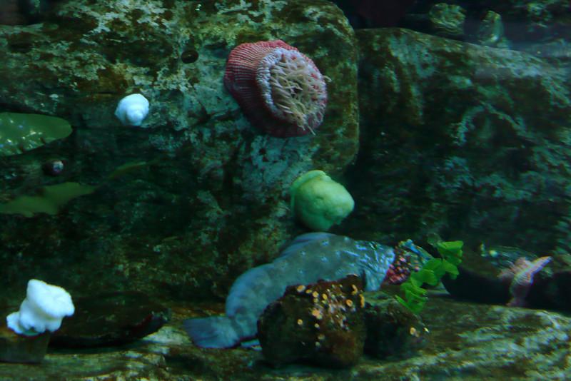 Parc Aquarium du Québec. Quebec City