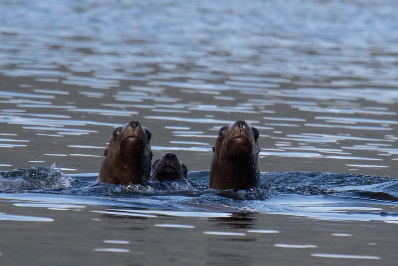 Juneau Alaska 2019-13.jpg