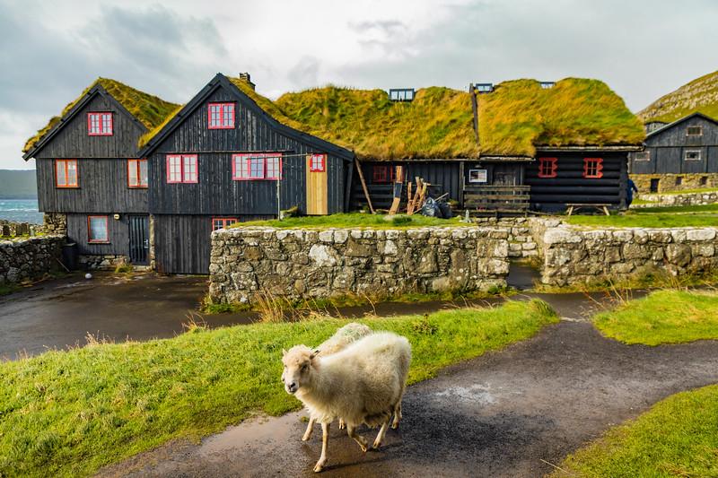 Faroes_5D4-3034.jpg