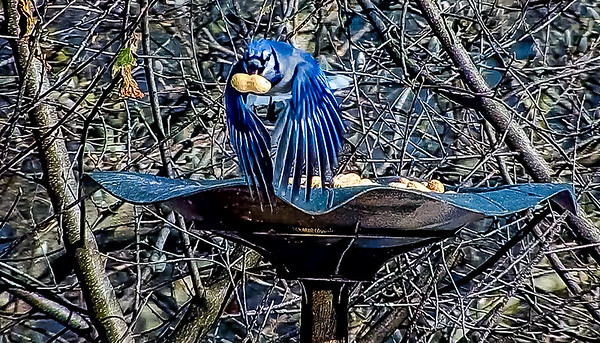 Backyard Winter Wildlife