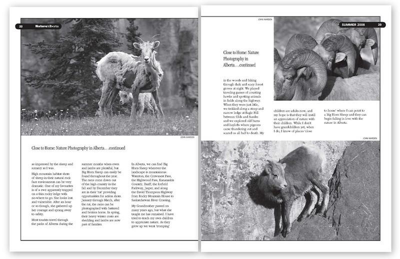 Bighorn Sheep Dbl 2.jpg