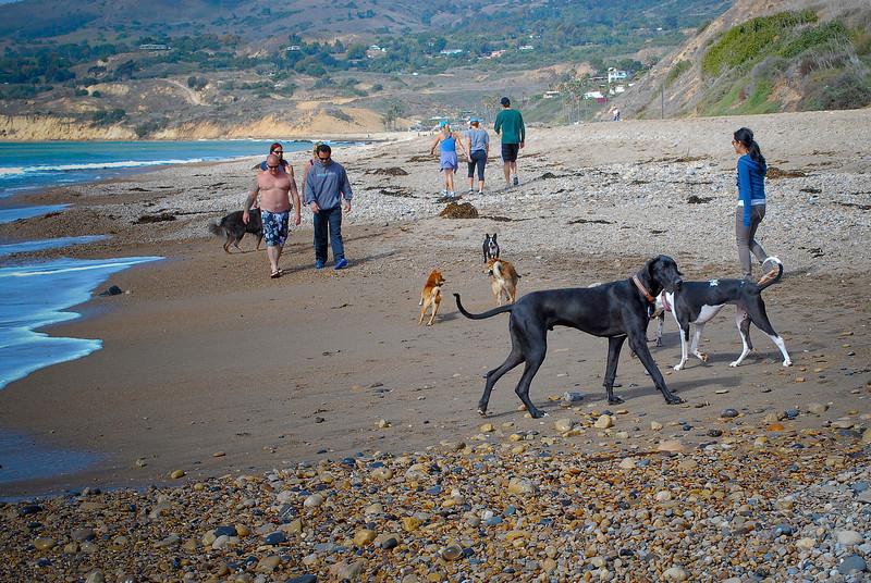 dogs_beach-107.jpg