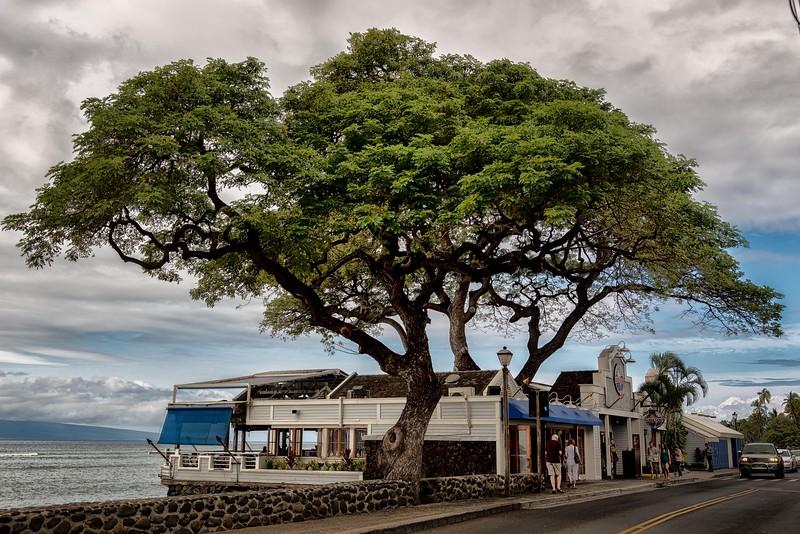 2015-02Feb01-Hawaii-25-Edit-Edit-Edit-Edit.jpg